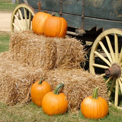 Fall Fun at Hardy's Reindeer Ranch!