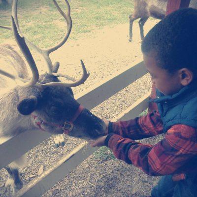 We fed Alaskan Reindeer at Hardy's Reindeer Ranch!