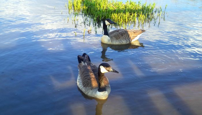 6 Easy Tips: Visiting Your Local Boardwalk and Wetlands