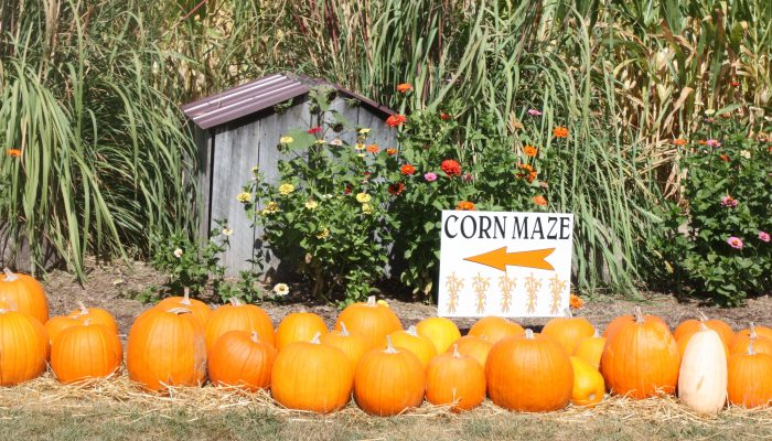 Fall Bucket List: Priebe Pumpkin Patch, Crawfordsville, IN Review